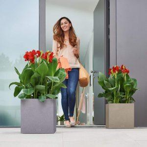 Növények bejárathoz