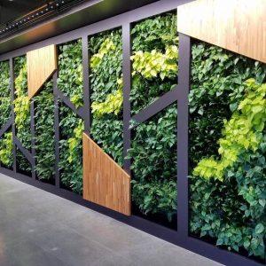 Növény Falak & Dekorációk