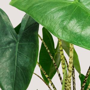 Óriás növények