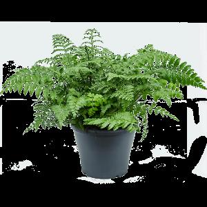 Növények fürdőszobába