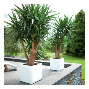 Elho Fehér nagyméretű kocka növénytartó