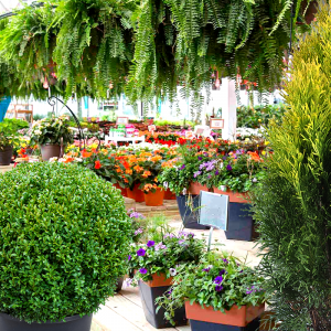 Növények és Virágok