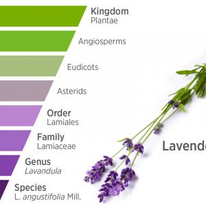 Növénynemzetségek Alapján